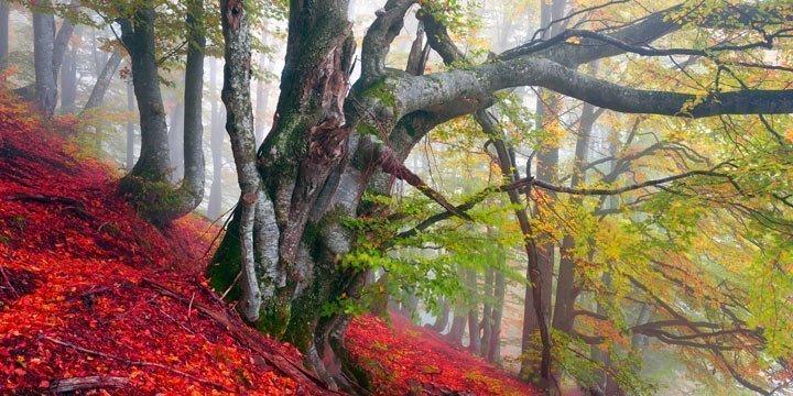 Das Rennen um die letzten Urwälder Europas