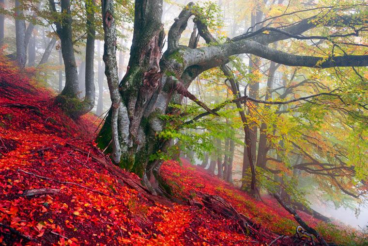 Der Rennen um die letzten Urwälder Europas