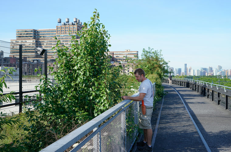 High Line - Eine grüne Oase in New York City