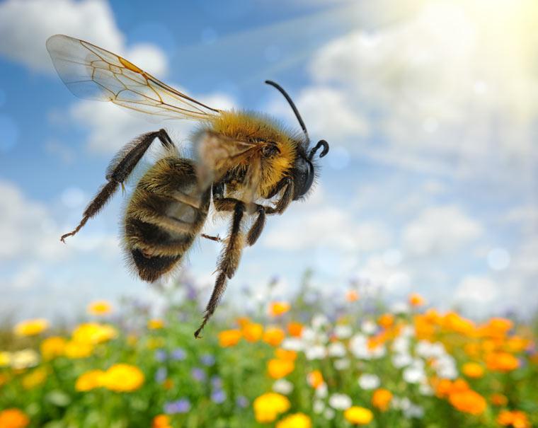 Honigbienen sind intelligenter als gedacht