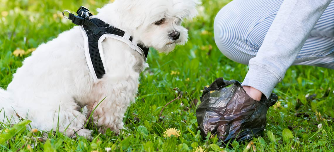 Hundekotbeutel: Gibt es umweltfreundliche Alternativen?
