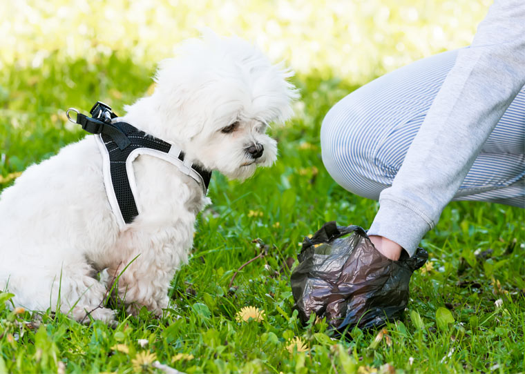Hundekotbeutel als Umweltproblem