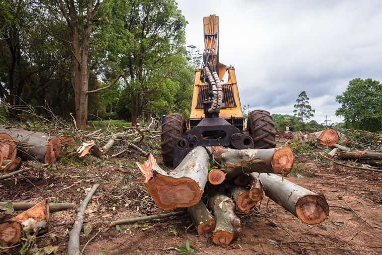 Illegale Abholzung in Rumänien durch FSC