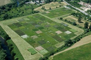 »Jena Experiment«: Artenverlust zerstört Ökosystem