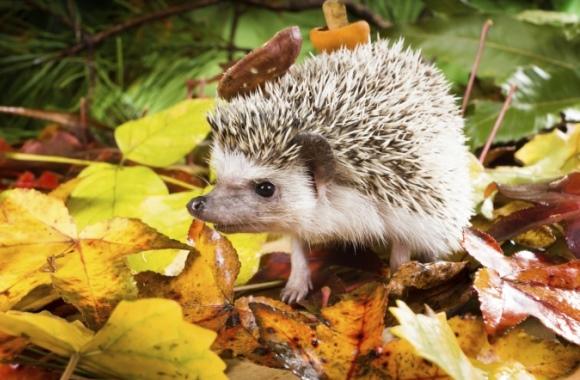 12 eindrucksvolle Bilder des Herbstes