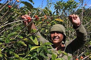 Nachhaltiger Anbau dank UTZ so stark wie nie zuvor