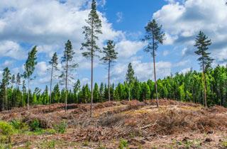 Nachhaltige Forstwirtschaft - »Erfinderin« der Nachhaltigkeit rühmt sich mit Raubbau im Wald