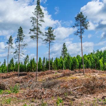 Wie nachhaltig ist die Forstwirtschaft wirklich?