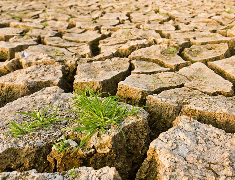 Große Dürre Perioden werden zur Regel.