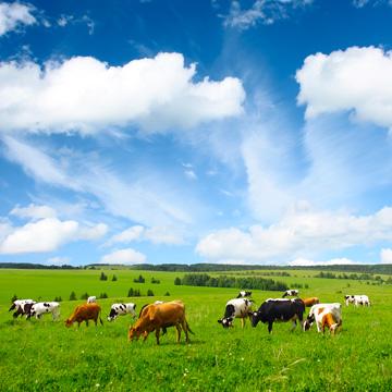 Kuh+Du ermittelt Verbrauchertäuschung in der Milchproduktion