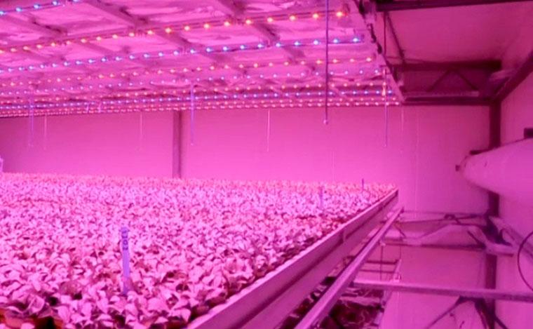 LED Lampen fördern Pflanzenwachstum