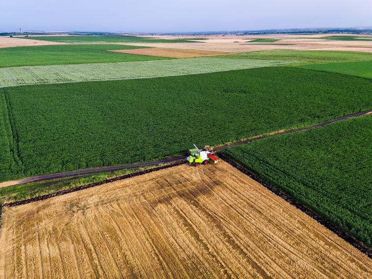 Land Grabbing nimmt extremes Ausmaß an