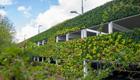 Living wall:größte, grüne Wand Europas