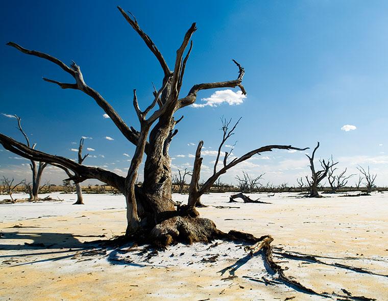 Sichtbare Folgen des Klimawandels.