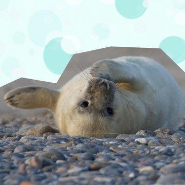 So retten wir unsere Meere und seine Tiere