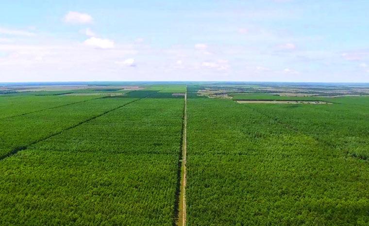 Wie aus kolumbianischen Savannen lebendige Mischwälder werden