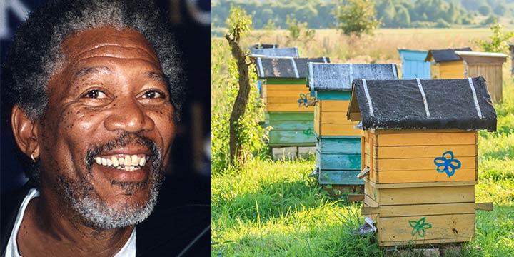 Morgan Freeman kämpft gegen das Bienensterben