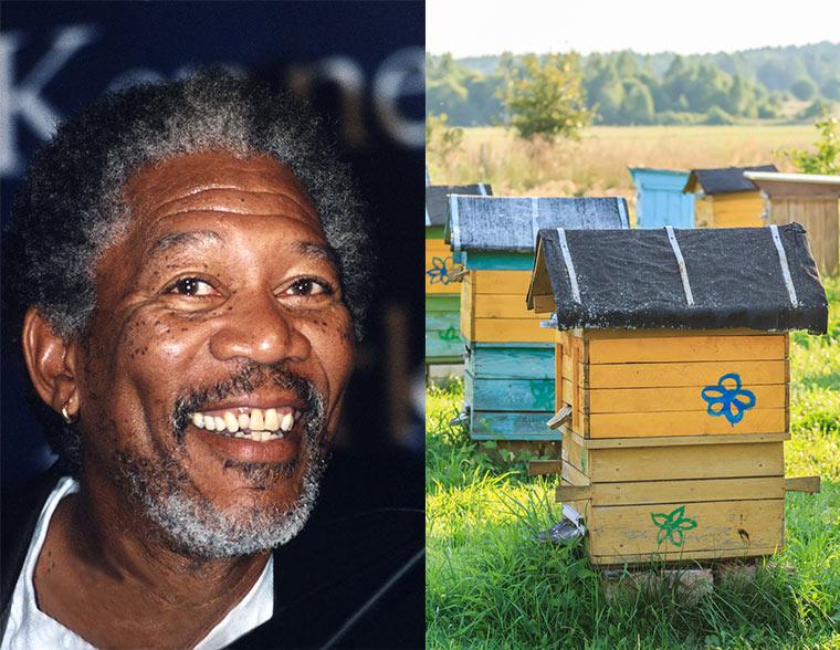 Morgan Freeman gegen Bienensterben