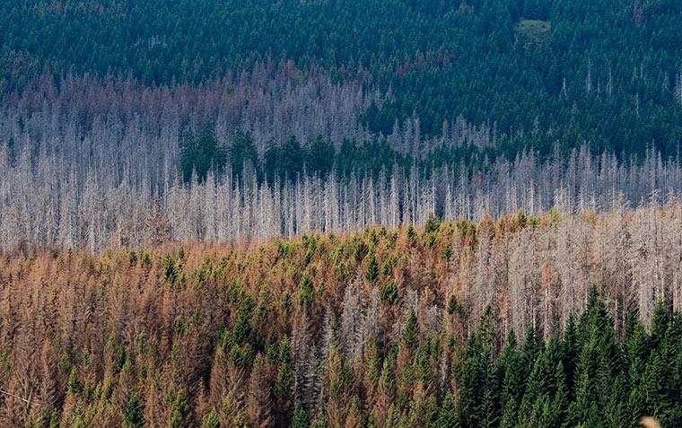 Auch in diesem Jahr sind trotz ausbleibender Hitze die Böden noch trocken. Darunter leidet vor allem der Wald.