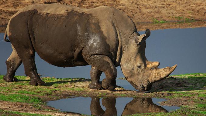 Nashörner Naturschutz Südafrika