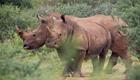 Naturschutz in Südafrika,Nashörner müssen umsiedeln