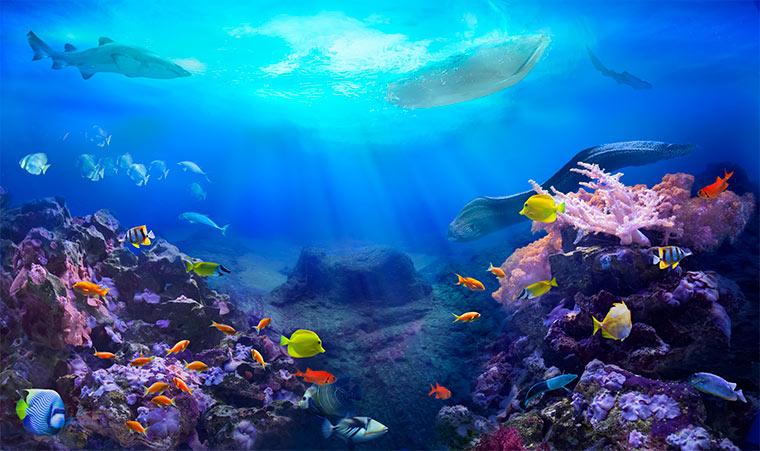 Das Meer - ein riesiges Ökosystem