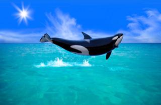 Waltrainerin bei Seaworld: Ein ehrlicher Erfahrungsbericht