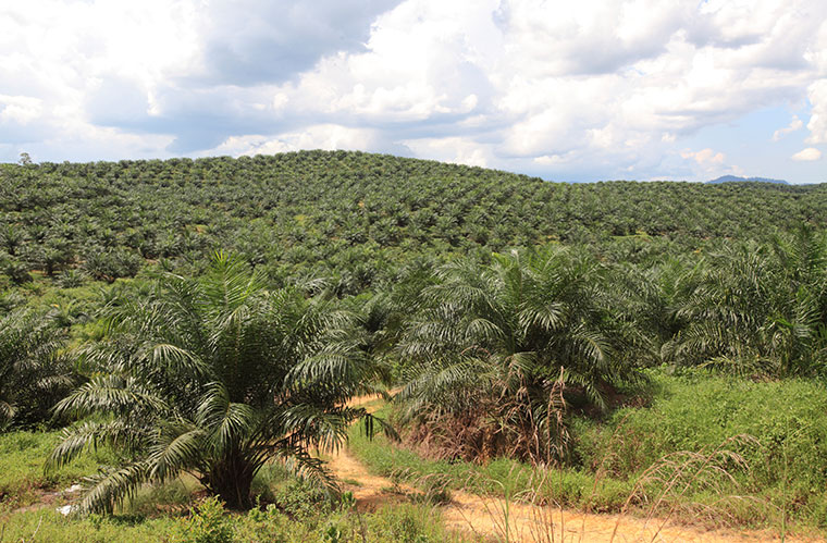 Palmoel-Plantage
