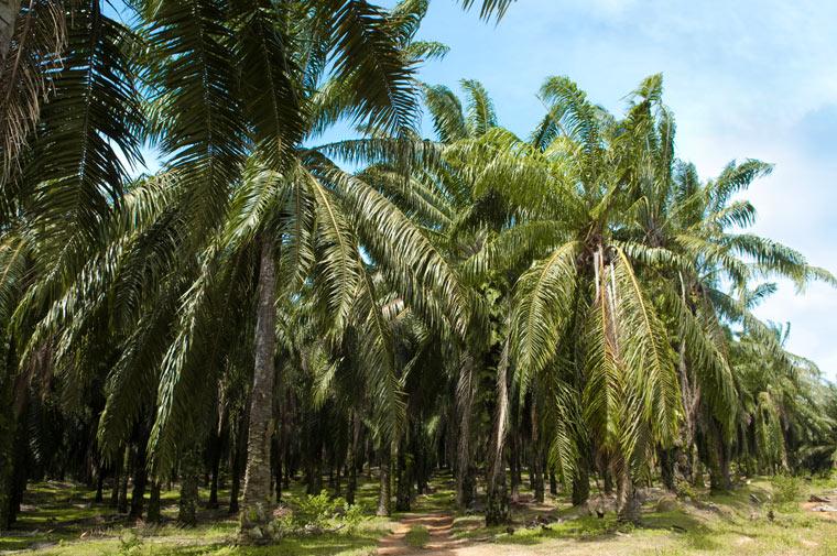 Palmöl ist sehr günstig und damit rückt ein negativer Aspekt direkt mit ins Blickfeld.