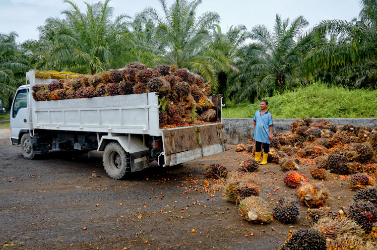 der geringe Preis resultiert aus einem extrem niedrigen Lohnniveau für die anstrengende Arbeit auf den Plantagen.