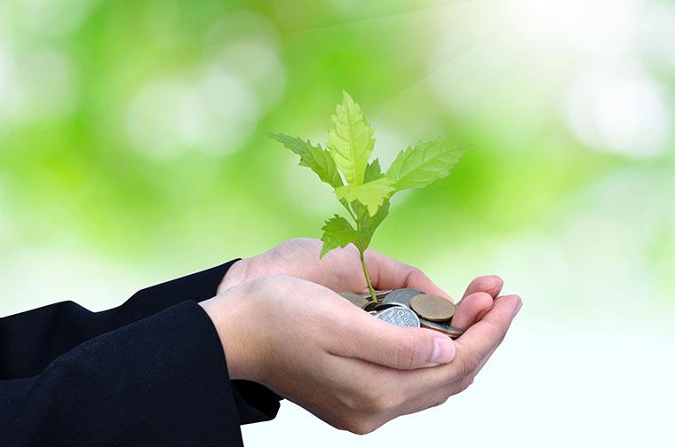 Hände halten Geld mit Pflanze