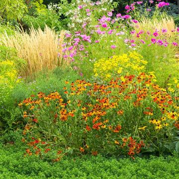 Nutzpflanzenvielfalt durch Genbanken