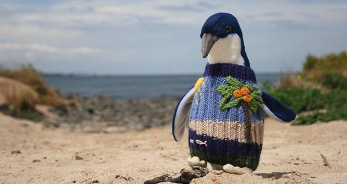 Pinguine Pullis wegen Ölpest