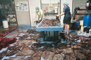 80 Plastiktüten in Wal gefunden