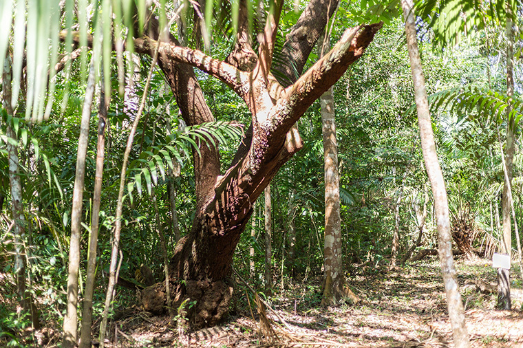Regenwald in Südamerika