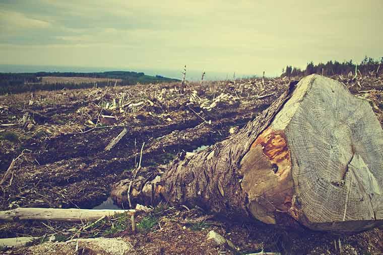 Rodung der Wälder