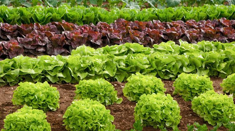 Gesundheitsbewusstsein wichtig bei der Lebensmittelwahl
