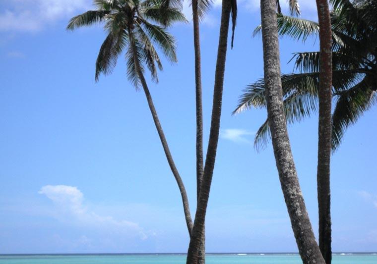 Sommer, Strand und Palmen ? doch die Kokospalme kann noch viel mehr als nur Urlaubsfeeling zu vermitteln
