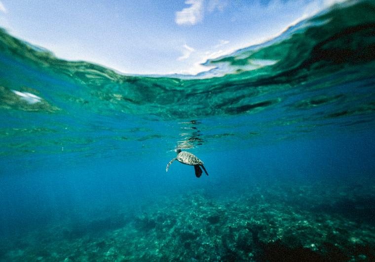 Globale Zusammenarbeit zum Schutz der Meere
