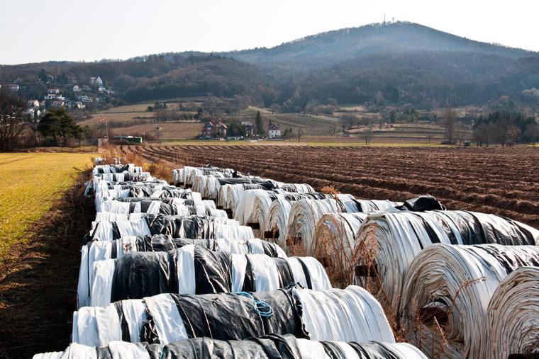 Spargelanbau unter Plastikfolie verschmutzt die Umwelt