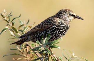 Das Massensterben der Vögel