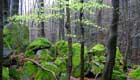 Eco Projekt Vogelsberg Naturschutz im Vulkangebiet