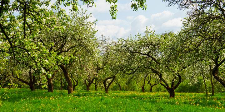 Zwei Drittel der deutschen Biotope sind in Gefahr
