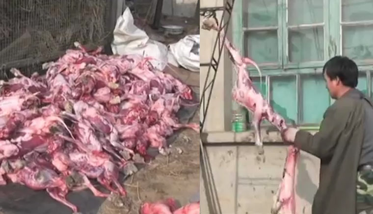 Tiere für Pelze getötet