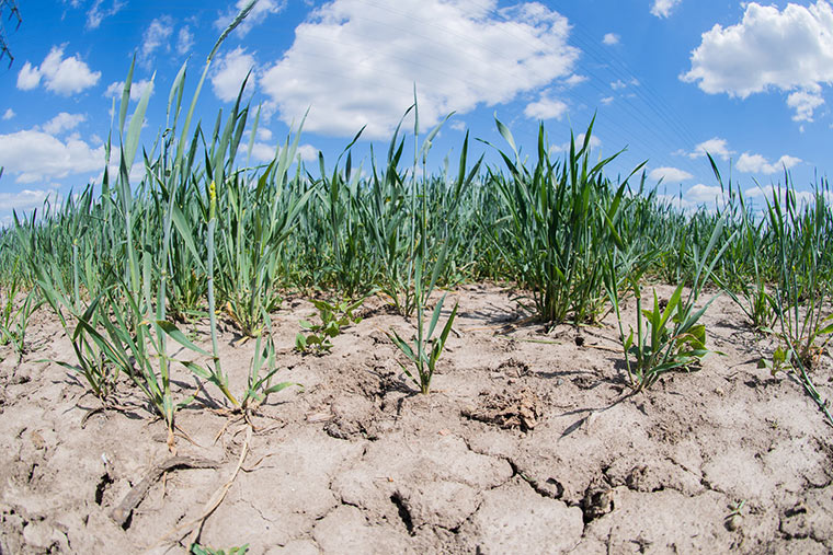 Trockene Ackerböden werden für die Landwirtschaft zunehmend zum Problem.