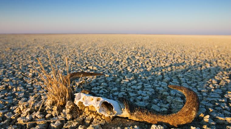 Auch zu wenige Niederschläge können zu schlimmen Naturkatastrophen führen.