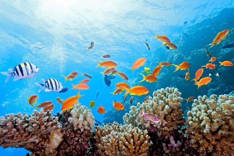 lebendige Ozeanwelt