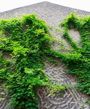 Fassadenbegrüung Urbane Gärten in Paris