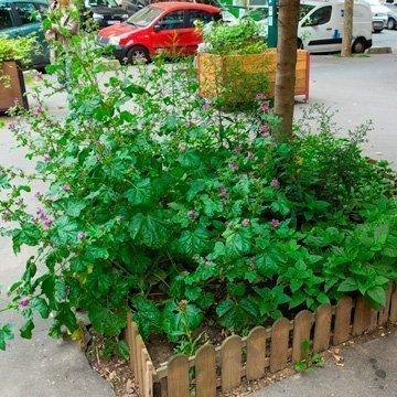Urban Gardening in der Stadt der Liebe