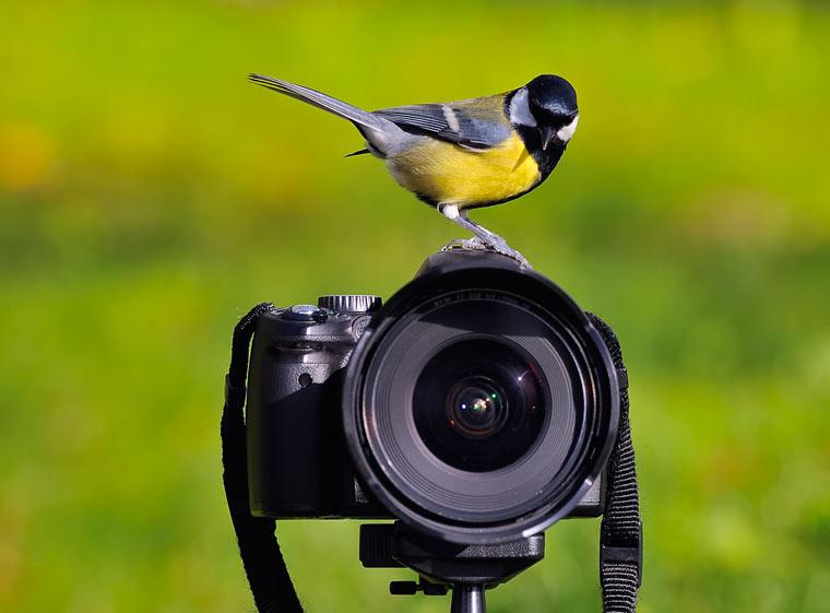 Lieblingsvogel fotografieren